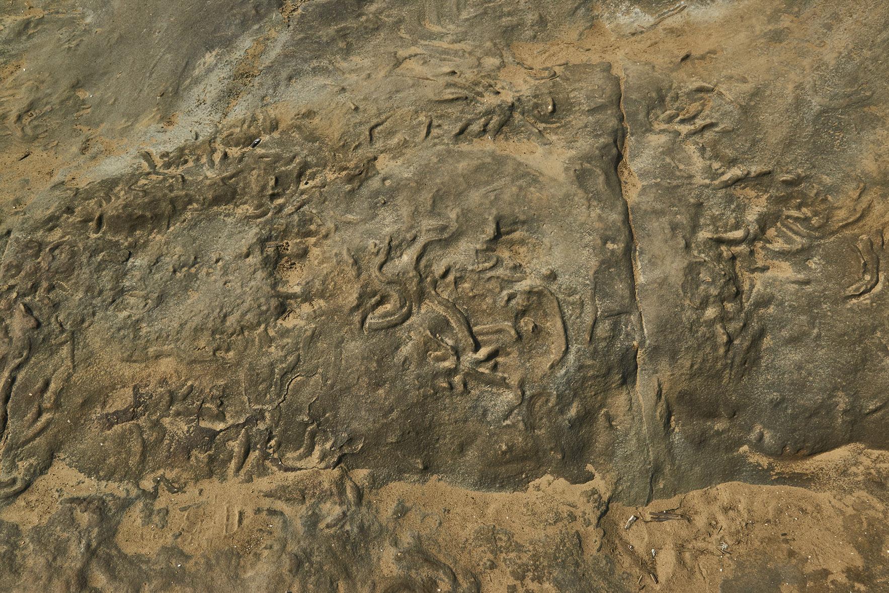 東北角生痕化石