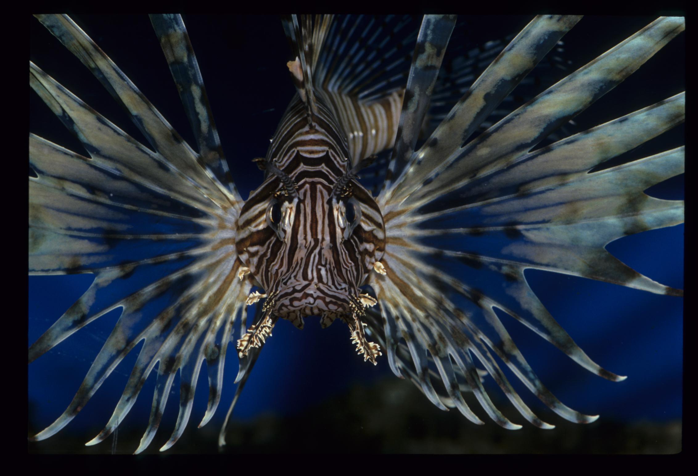 有毒海洋生物之認識與中毒後之處理PDF檔