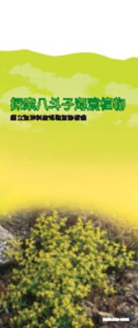探索八斗子海濱植物(非賣品)