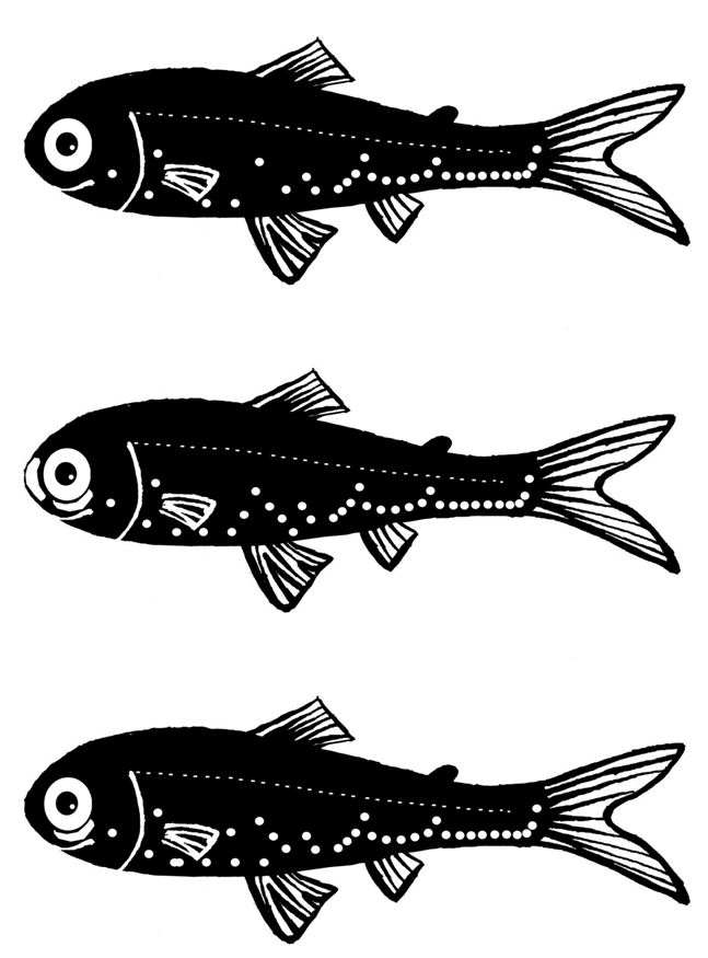 魚兒辯辨辨
