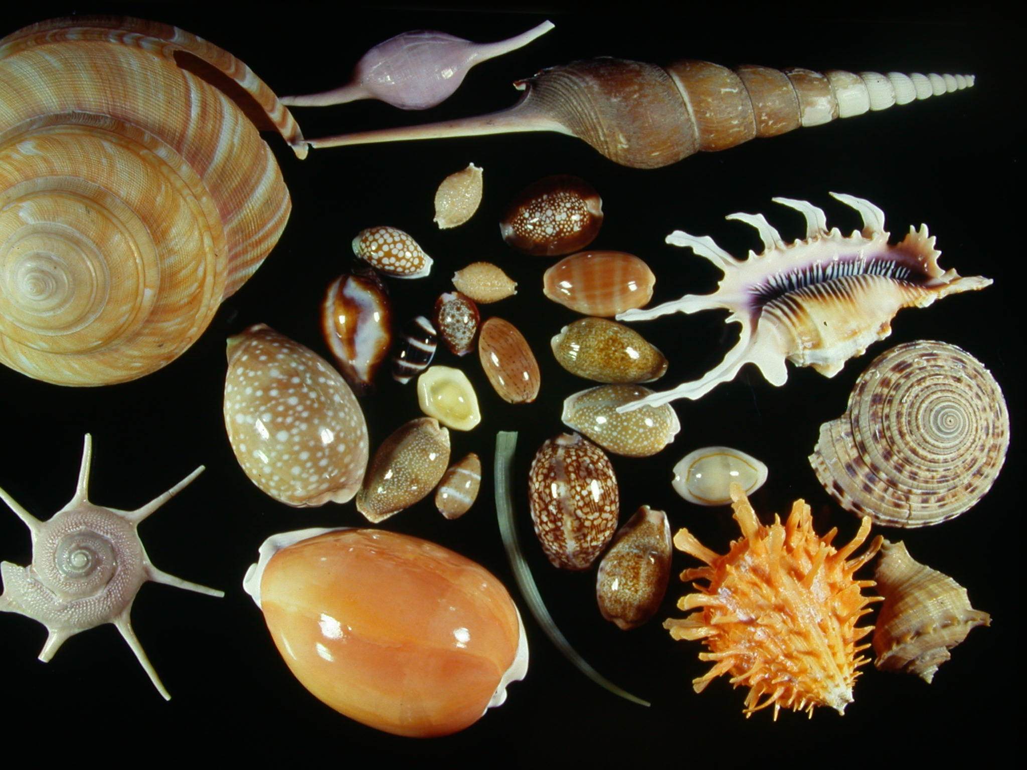 貝受注目-軟體動物多樣性PDF檔