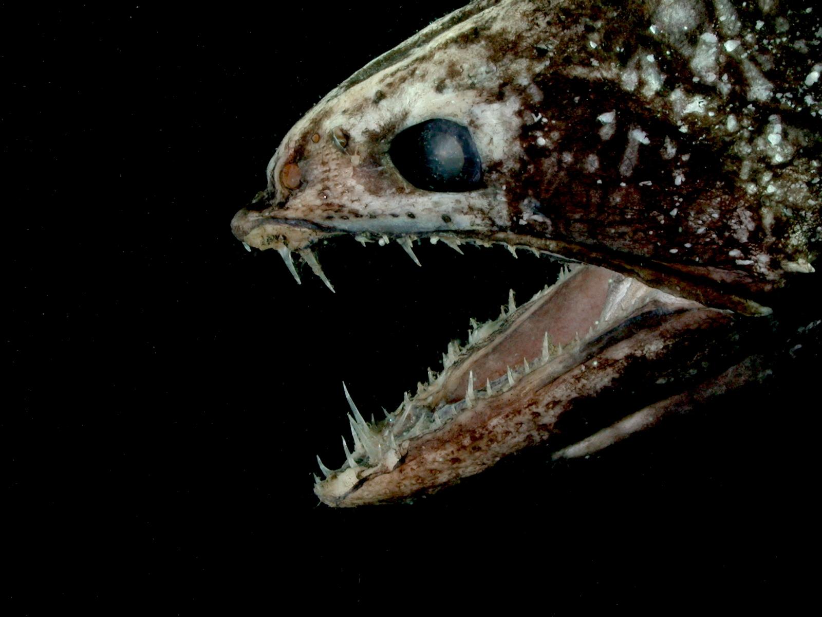 深、深、深!談深海生物PDF檔