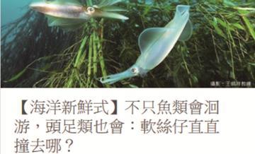 科普小專欄002 - 海洋新鮮式 - 不只魚類會洄游,頭足類也會:軟絲仔直直撞去哪?