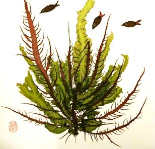 欣賞海藻之美PDF檔