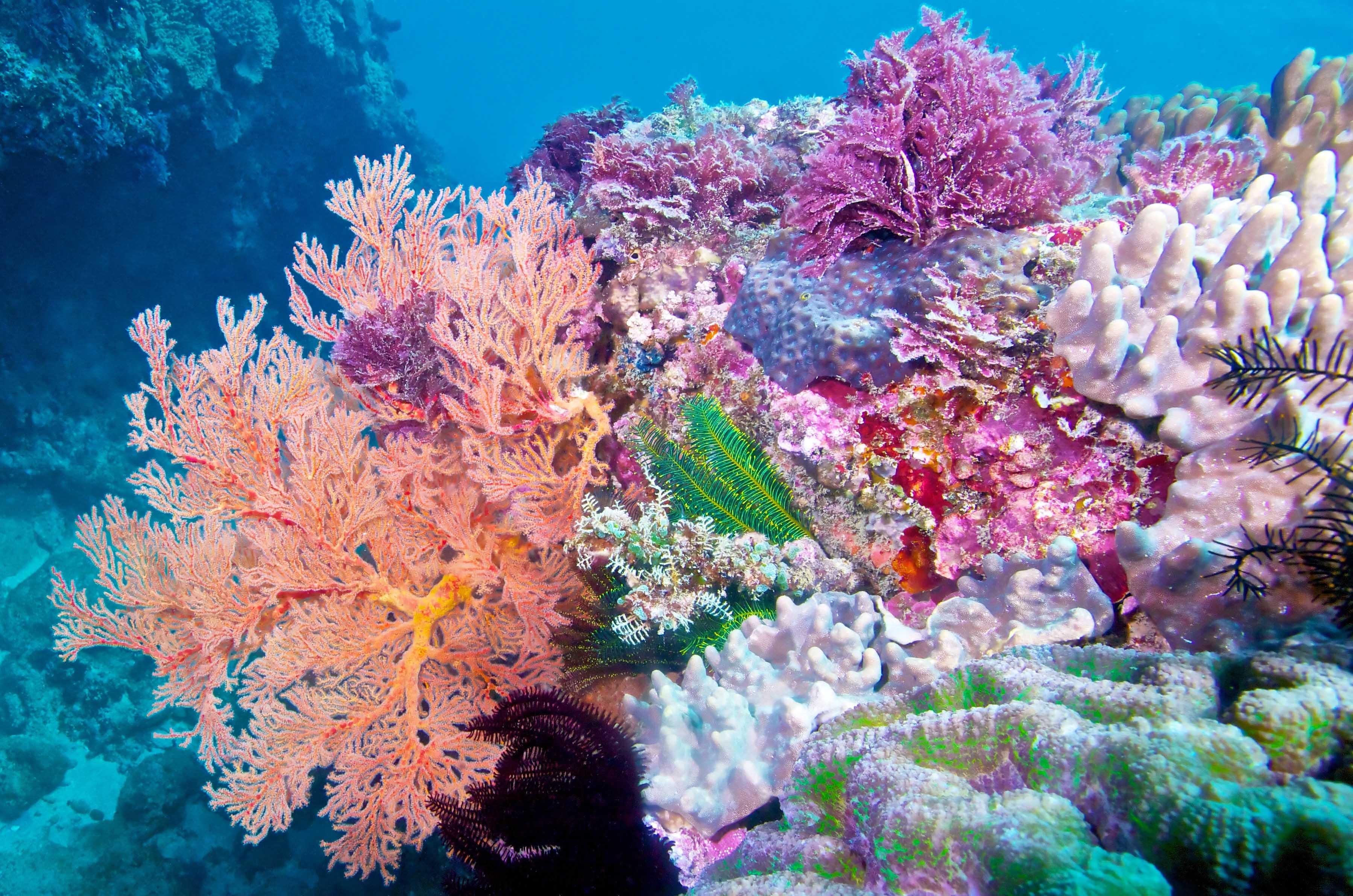 珊瑚礁的復育之路-從保護到移植,改善整體生態系統