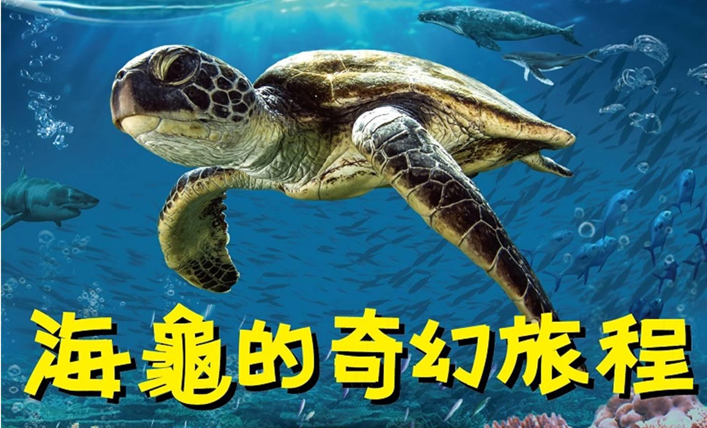 IMAX 3D 影片介紹-海龜的奇幻旅程(109/1/25上映)