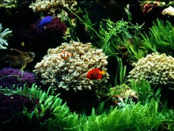 科普小專欄009 - 【海洋海藻式】秘密家園- 海藻叢林
